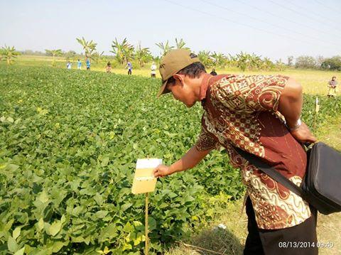 Mengukur Kemampuan Sdm Petani Dengan Ballot Kim Deru Maju
